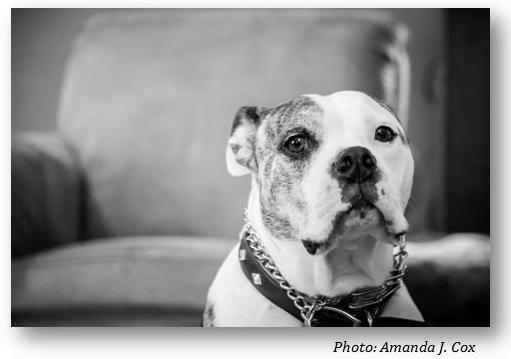 Bosco. Photo by Amanda J. Cox.