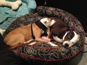 Blue and Violet make the cutest senior dog couple!