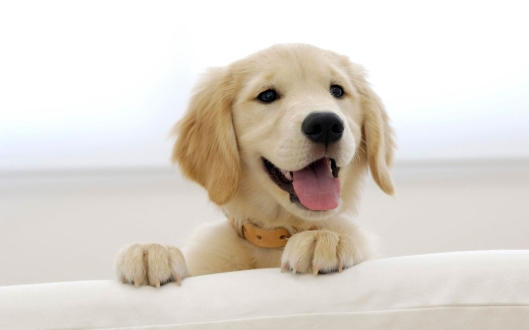 6784284-cute-dogs-wallpaper