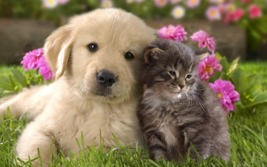 animal-cute-cat-and-dog-cuddling-cats-dogs_309803