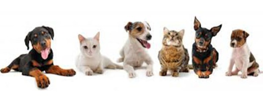 dogs-cat-line-up