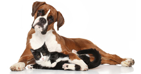 file_21055_column_are-there-classes-for-shelter-pets